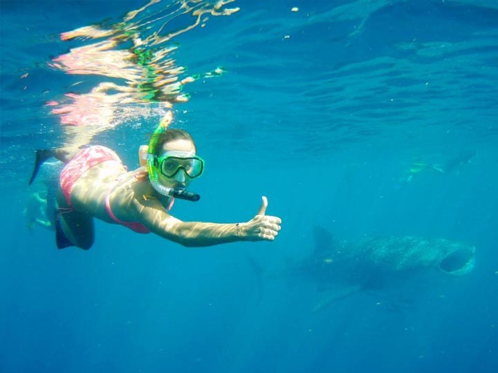 Mahi Mahi WHALE SHARK SWIM DIVE