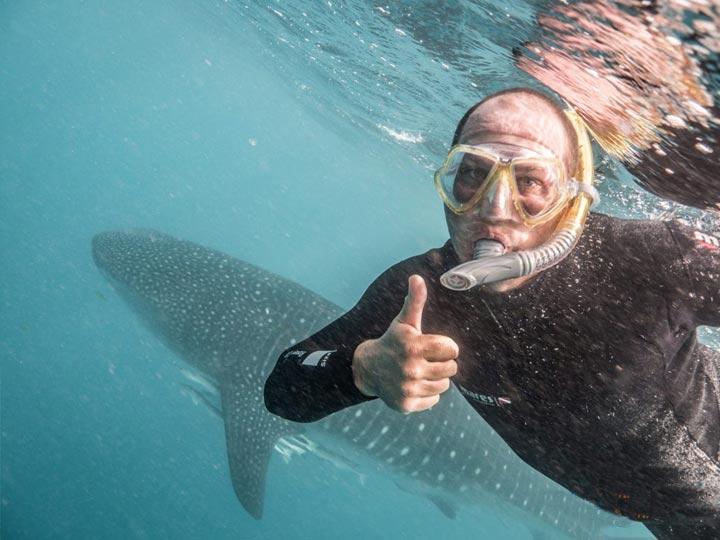 Mahi Mahi WHALE SHARK SWIM DIVE