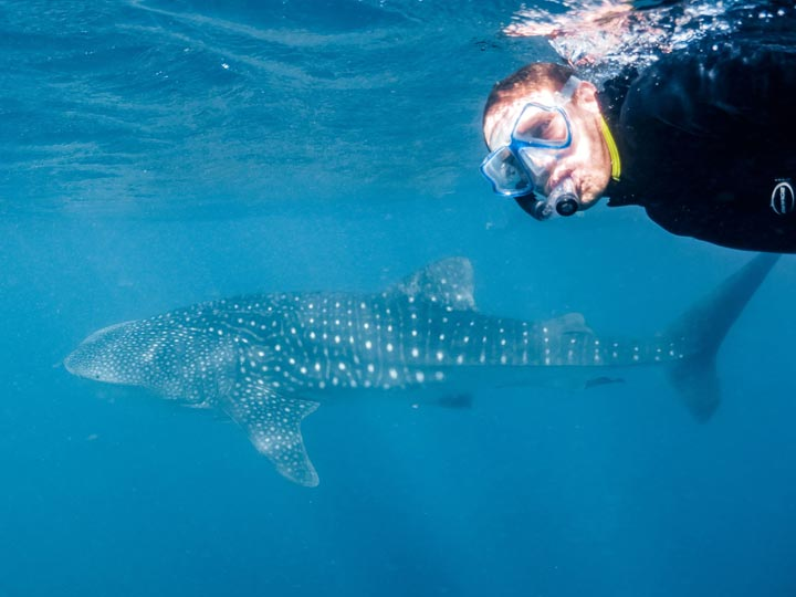 SEAZONE WHALE SHARK SWIM DIVE