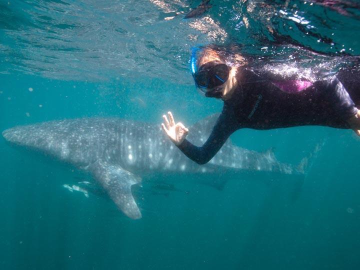 WINDCHEETAH WHALE SHARK SWIM DIVE