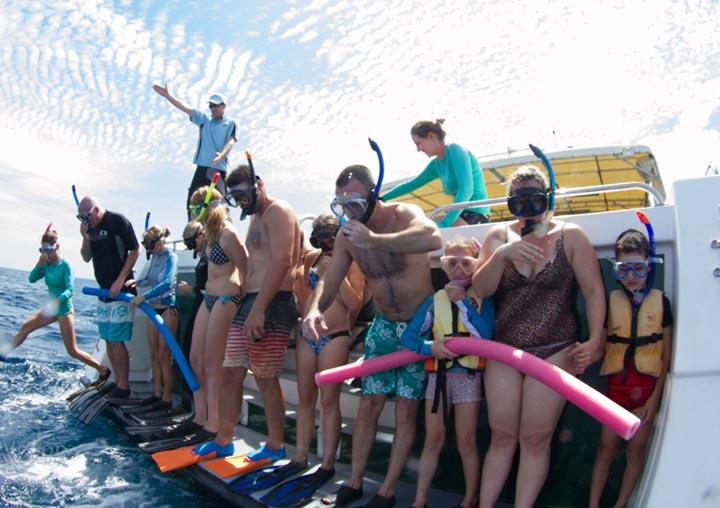 Whale Shark Swim Dive The Magellan