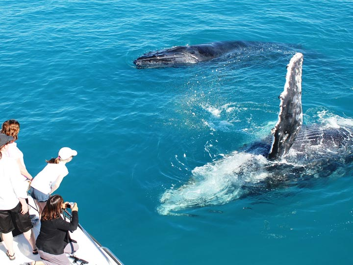 BALLENA WHALE WATCHING TOURS BROOME