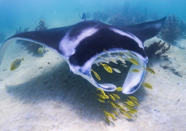 Coral Bay Whale Shark Tours Kurni Ku