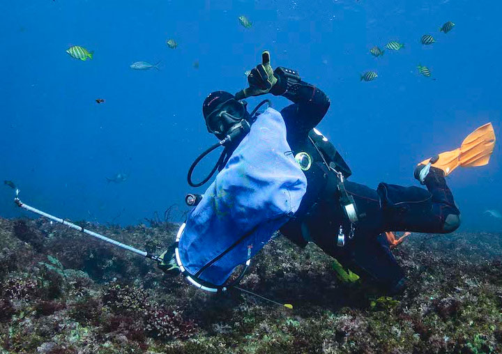 Diving Perth WA Lionfish IV