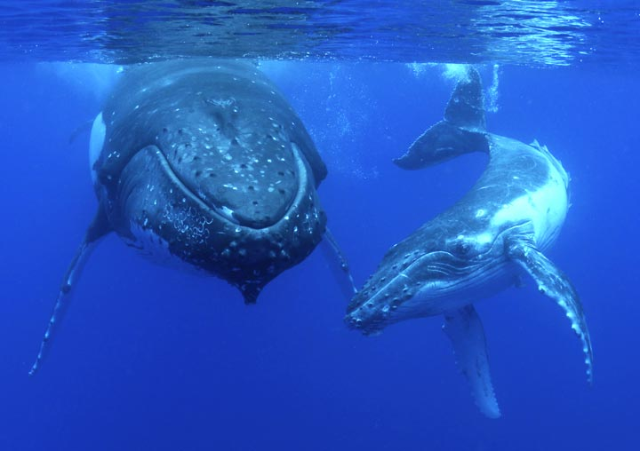 BEST WHALE WATCHING TOUR EXMOUTH