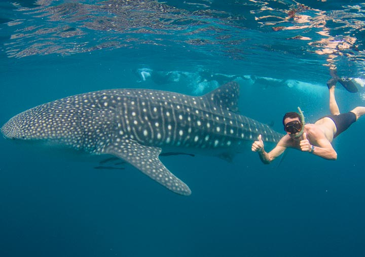 SWIM WITH WHALESHARKS CORAL BAY