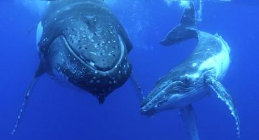 WHALE WATCHING TOURS READY TO BOOM IN 2020
